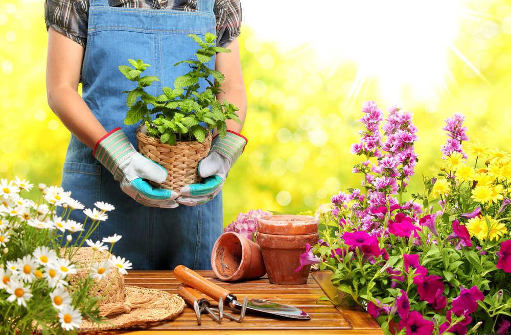Jardinería, más que un hobby para el tiempo libre