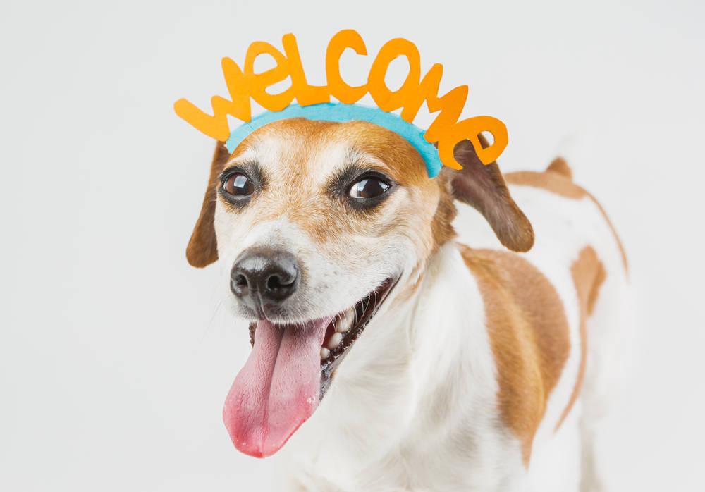 Viajes dogfriendly y antidogs